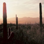 Image link: A Sonoran Desert Surprise
