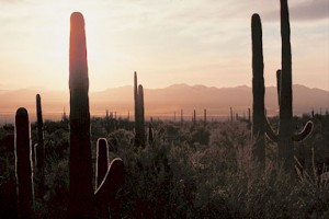 A sunrise like this is a daily occurrence in the Sonoran Desert. Temperature at this time of the morning is usually quite chilly. Temperatures reaching or exceeding one hundred degrees are only a few hours away though!