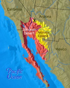 """Map showing the entire Sonoran Desert. The Arizona Upland Eco Region is shown in yellow. The """"X"""" marks the approximate location of our surveying expedition."""